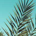 Een palm boom in je huis